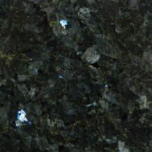 Labrador donker